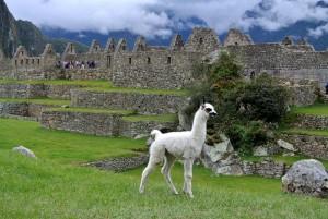 TDM famille Séchet - Cusco - 11 (Copier)