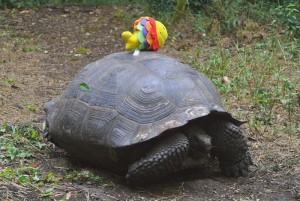 tour du monde famille Séchet - Galapagos - 1 (Copier)