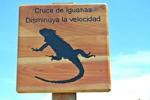 tour du monde famille Séchet - Galapagos - 15 (Copier)