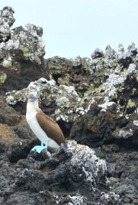 tour du monde famille Séchet - Galapagos - 18 (Copier)