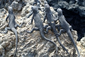 tour du monde famille Séchet - Galapagos - 19 (Copier)