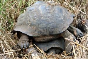 tour du monde famille Séchet - Galapagos - 2 (Copier)