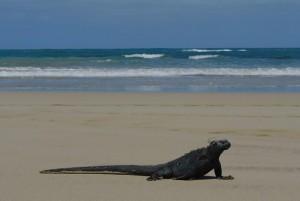 tour du monde famille Séchet - Galapagos - 20 (Copier)