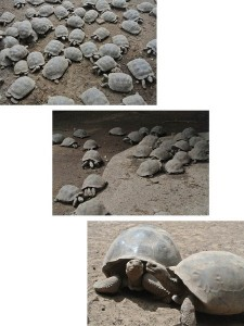 tour du monde famille Séchet - Galapagos - 24 (Copier)