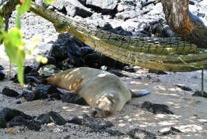 tour du monde famille Séchet - Galapagos - 4 (Copier)